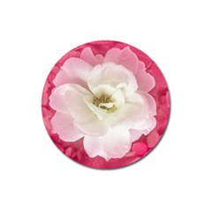 White Rose With Pink Leaves Around  Magnet 3  (round)