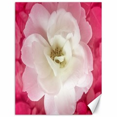 White Rose with Pink Leaves Around  Canvas 18  x 24  (Unframed)