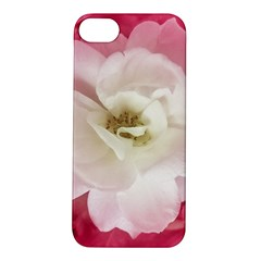 White Rose With Pink Leaves Around  Apple Iphone 5s Hardshell Case