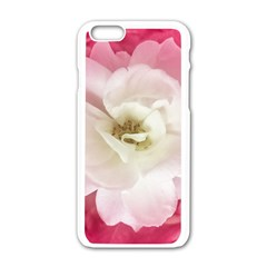 White Rose With Pink Leaves Around  Apple Iphone 6 White Enamel Case