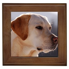 3 Labrador Retriever Framed Ceramic Tile