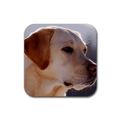 3 Labrador Retriever Drink Coasters 4 Pack (Square)