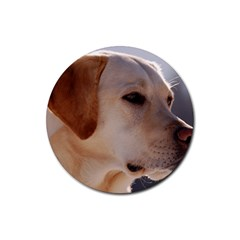 3 Labrador Retriever Drink Coasters 4 Pack (Round)