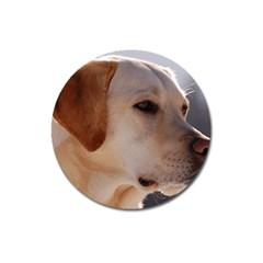 3 Labrador Retriever Magnet 3  (Round)