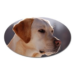 3 Labrador Retriever Magnet (Oval)
