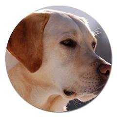 3 Labrador Retriever Magnet 5  (Round)