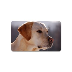 3 Labrador Retriever Magnet (Name Card)