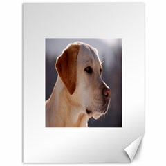 3 Labrador Retriever Canvas 36  x 48  (Unframed)