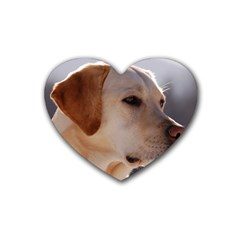 3 Labrador Retriever Drink Coasters 4 Pack (Heart)