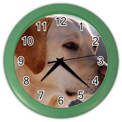 3 Labrador Retriever Wall Clock (Color)