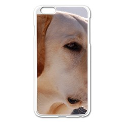 3 Labrador Retriever Apple iPhone 6 Plus Enamel White Case