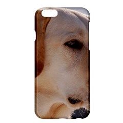 3 Labrador Retriever Apple iPhone 6 Plus Hardshell Case