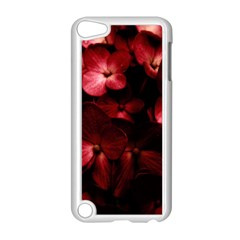 Red Flowers Bouquet in Black Background Photography Apple iPod Touch 5 Case (White)
