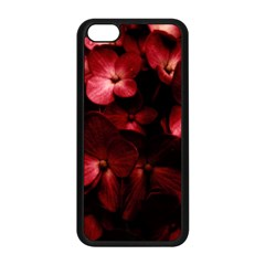 Red Flowers Bouquet In Black Background Photography Apple Iphone 5c Seamless Case (black)
