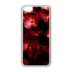 Red Flowers Bouquet in Black Background Photography Apple iPhone 5C Seamless Case (White)