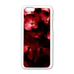 Red Flowers Bouquet In Black Background Photography Apple Iphone 6 White Enamel Case