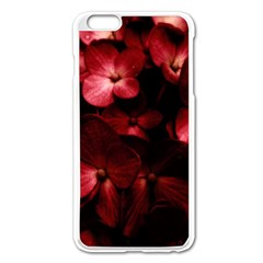 Red Flowers Bouquet In Black Background Photography Apple Iphone 6 Plus Enamel White Case