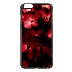 Red Flowers Bouquet In Black Background Photography Apple Iphone 6 Plus Black Enamel Case