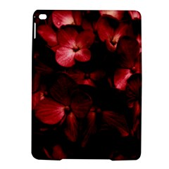Red Flowers Bouquet in Black Background Photography Apple iPad Air 2 Hardshell Case
