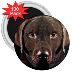 Chocolate Lab 3  Button Magnet (100 Pack)