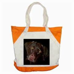 Inquisitive Chocolate Lab Accent Tote Bag