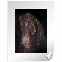 Inquisitive Chocolate Lab Canvas 18  X 24  (unframed)