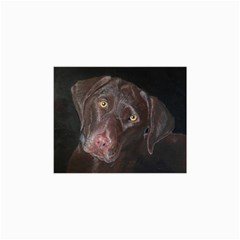 Inquisitive Chocolate Lab Canvas 20  X 30  (unframed)