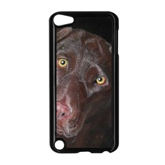 Inquisitive Chocolate Lab Apple iPod Touch 5 Case (Black)