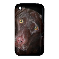 Inquisitive Chocolate Lab Apple iPhone 3G/3GS Hardshell Case (PC+Silicone)