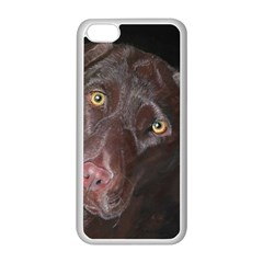 Inquisitive Chocolate Lab Apple iPhone 5C Seamless Case (White)
