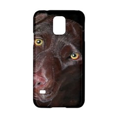 Inquisitive Chocolate Lab Samsung Galaxy S5 Hardshell Case