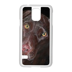 Inquisitive Chocolate Lab Samsung Galaxy S5 Case (White)
