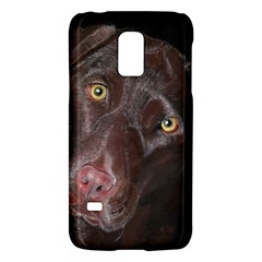 Inquisitive Chocolate Lab Samsung Galaxy S5 Mini Hardshell Case