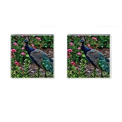 Peacock With Roses Cufflinks (square)