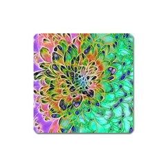 Abstract Peacock Chrysanthemum Magnet (square)