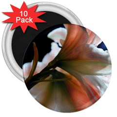 Amaryllis In The Light 3  Button Magnet (10 Pack)
