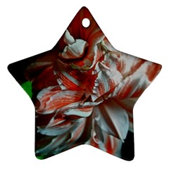 Amaryllis Double Bloom Star Ornament (two Sides)