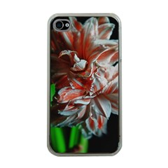 Amaryllis Double Bloom Apple Iphone 4 Case (clear)