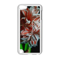 Amaryllis Double Bloom Apple iPod Touch 5 Case (White)