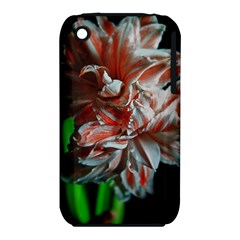 Amaryllis Double Bloom Apple iPhone 3G/3GS Hardshell Case (PC+Silicone)