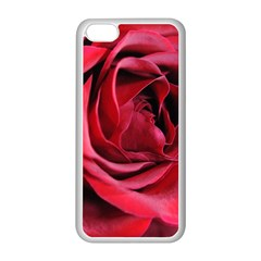 An Open Rose Apple iPhone 5C Seamless Case (White)