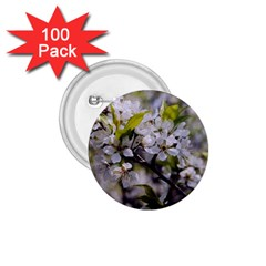 Apple Blossoms 1 75  Button (100 Pack)
