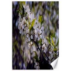 Apple Blossoms Canvas 12  x 18  (Unframed)