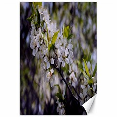 Apple Blossoms Canvas 20  X 30  (unframed)