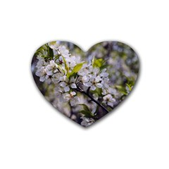 Apple Blossoms Drink Coasters 4 Pack (heart)