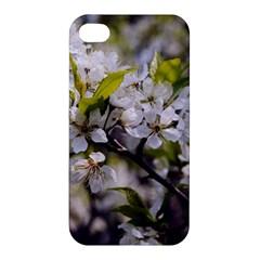 Apple Blossoms Apple Iphone 4/4s Premium Hardshell Case