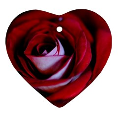 Red Rose Center Heart Ornament (two Sides)