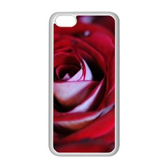 Red Rose Center Apple iPhone 5C Seamless Case (White)