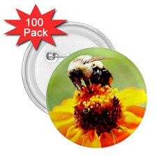 Bee On A Flower 2 25  Button (100 Pack)