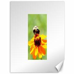 Bee on a Flower Canvas 36  x 48  (Unframed)